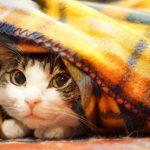 冬に家で暖かく過ごすコツ